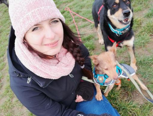 Hundsitter Koblenz, Bassenheim, ein Gassifrauchen für Deinen Hund