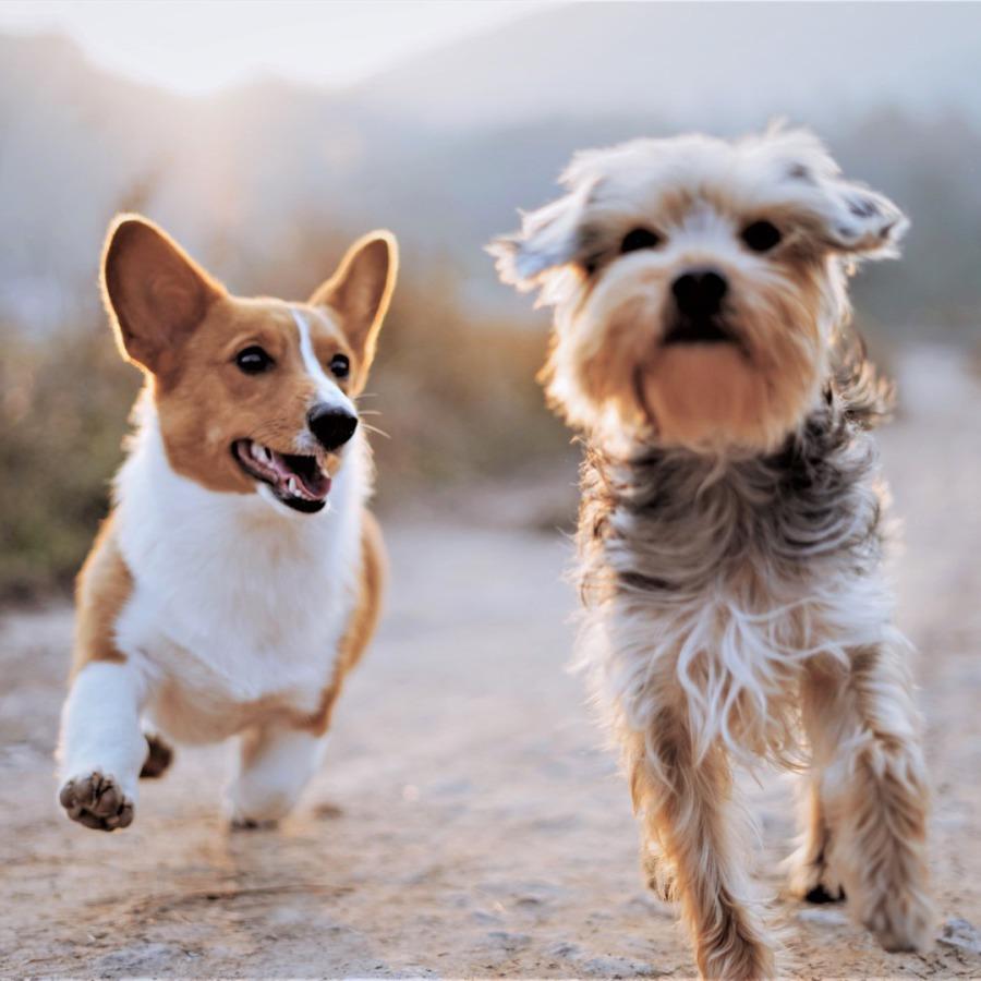 Hundegruppe, Gassi gehen, Hundefreunde