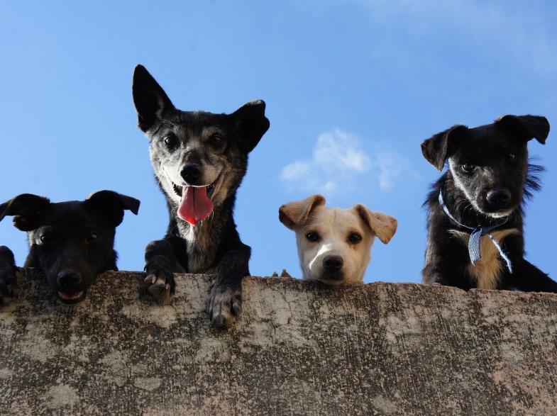 Die Gassi-Gang, Hundefreunde für Deinen Hund